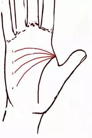 Sağ el çizgileri - Tıbbı Nebi