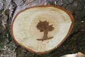 Ceviz Ağacı Fotoğrafımızı Çekiyor