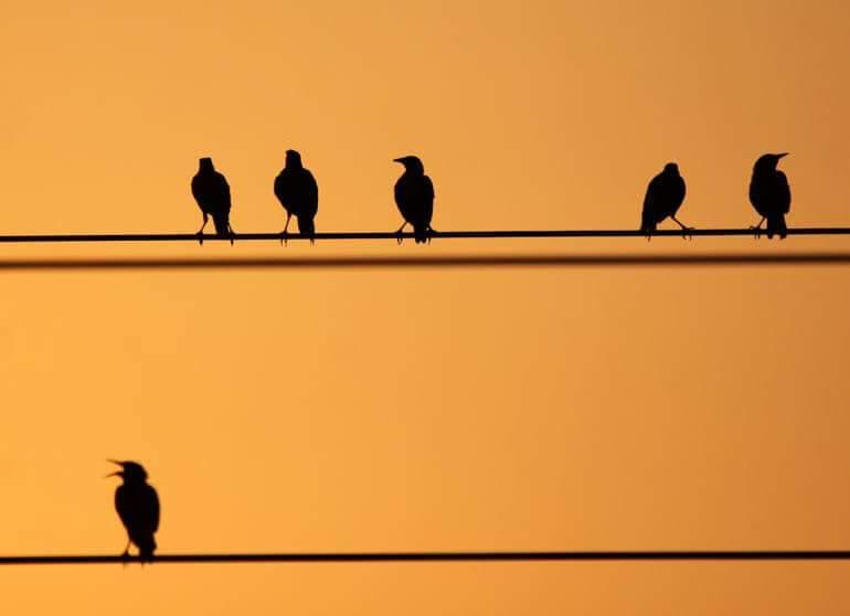 Elektrik Tellerine Konan Kuşları Neden Elektrik Çarpmaz?